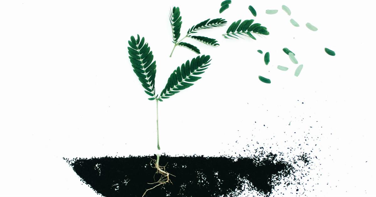 come fare il compost domestico e rigenerare il suolo