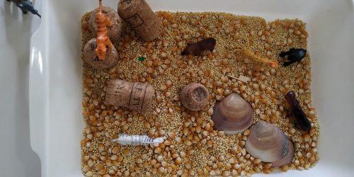 In questo piccolo mondo, è stata utilizzato del mais e dei semi di quinoa, tappi di sughero e conchiglie.