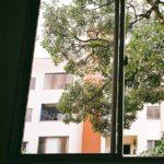 """""""Dalla finestra vedo…"""": allenare lo sguardo dalla finestra di casa"""
