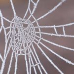 Genitori e insegnanti al tempo della didattica a distanza: l'importanza di tessere una rete